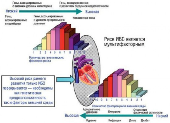 Причины развития ишемической болезни сердца