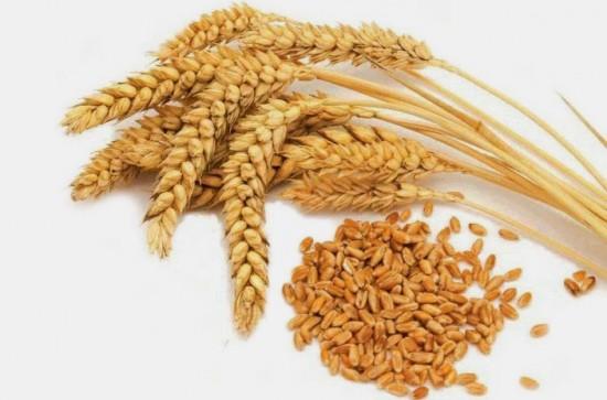 Молотые отруби пшеницы - хорошая профилактика атеросклероза